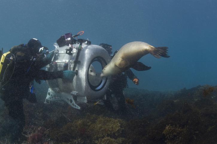 مشاهدة فيلم Under The Sea 3D 2009 HD مترجم كامل اون لاين