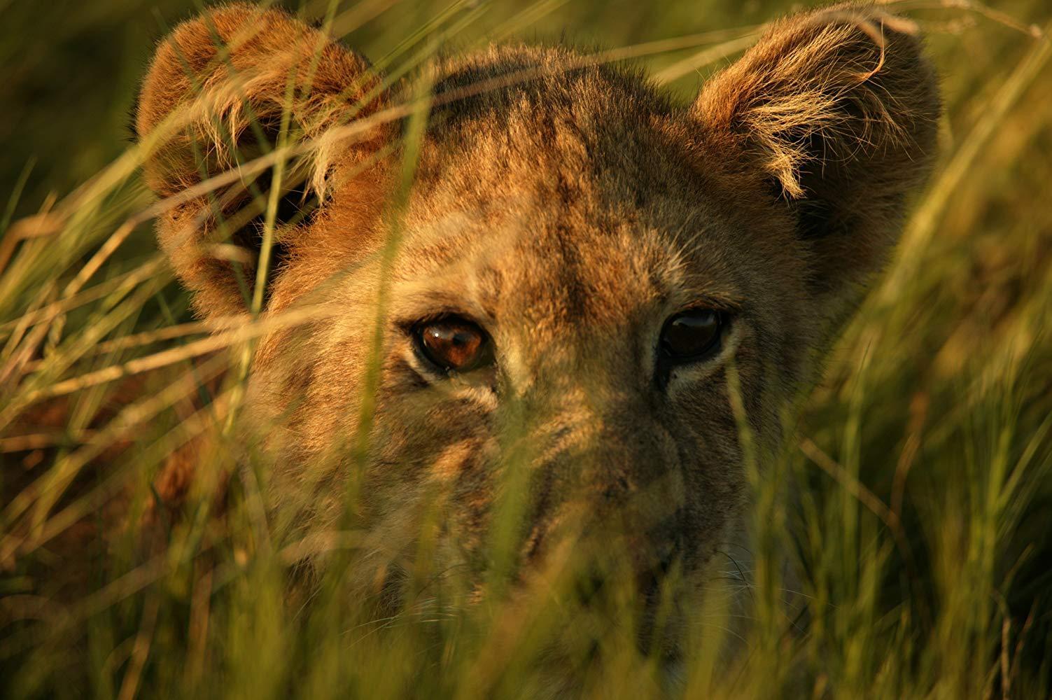 مشاهدة فيلم The Last Lions 2011 HD مترجم كامل اون لاين