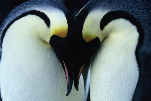 مشاهدة فيلم March Of The Penguins 2005 HD مترجم كامل اون لاين